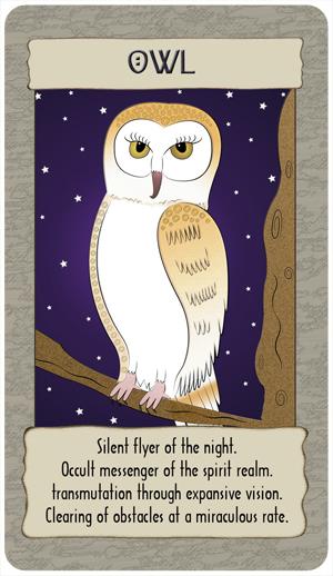 owl_GC copy.jpg